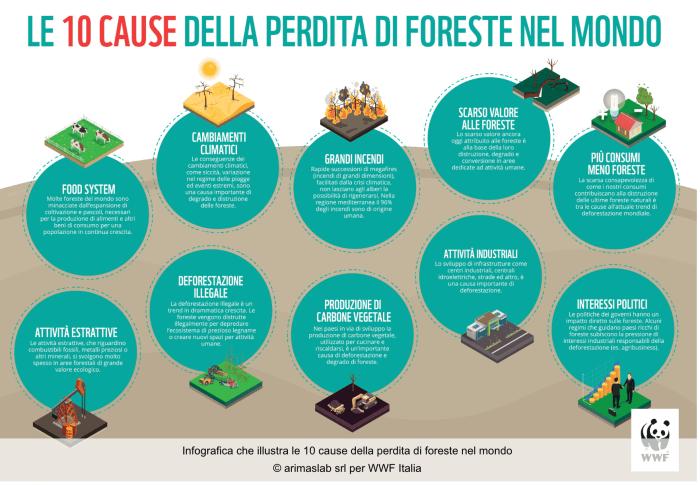 Le 10 cause della perdita di foreste