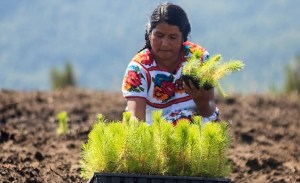 Agricoltura in America Latina