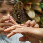 bambini e farfalle