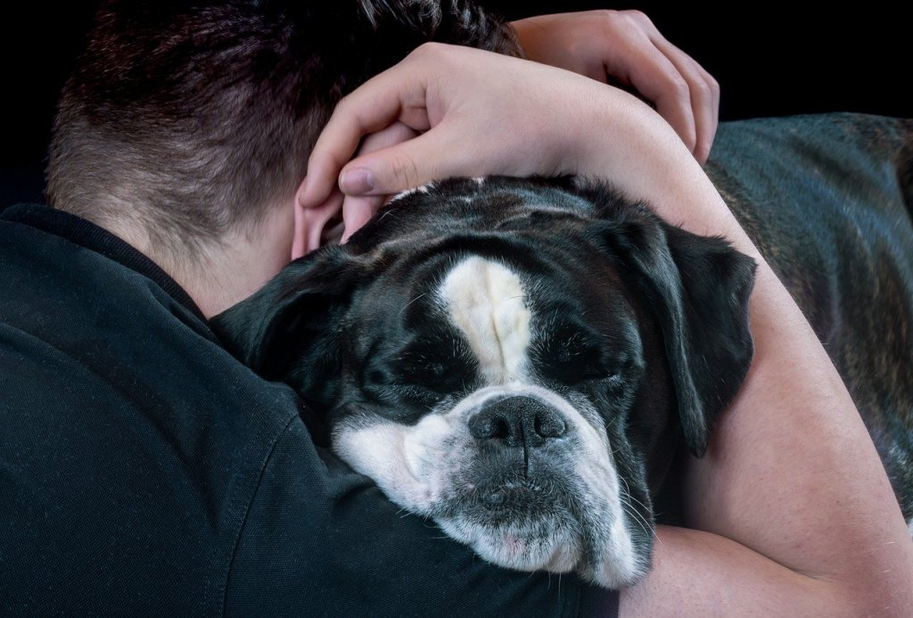 abbracci e cani