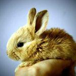 Un coniglietto in una mano