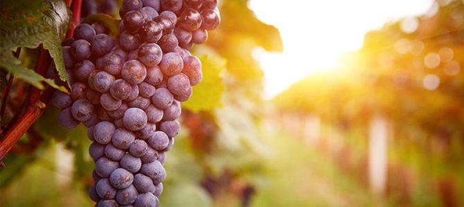 Propriedades Organolépticas do Vinho