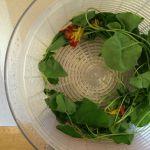 nasturtium pesto (and other uses for all of those nasturtiums)
