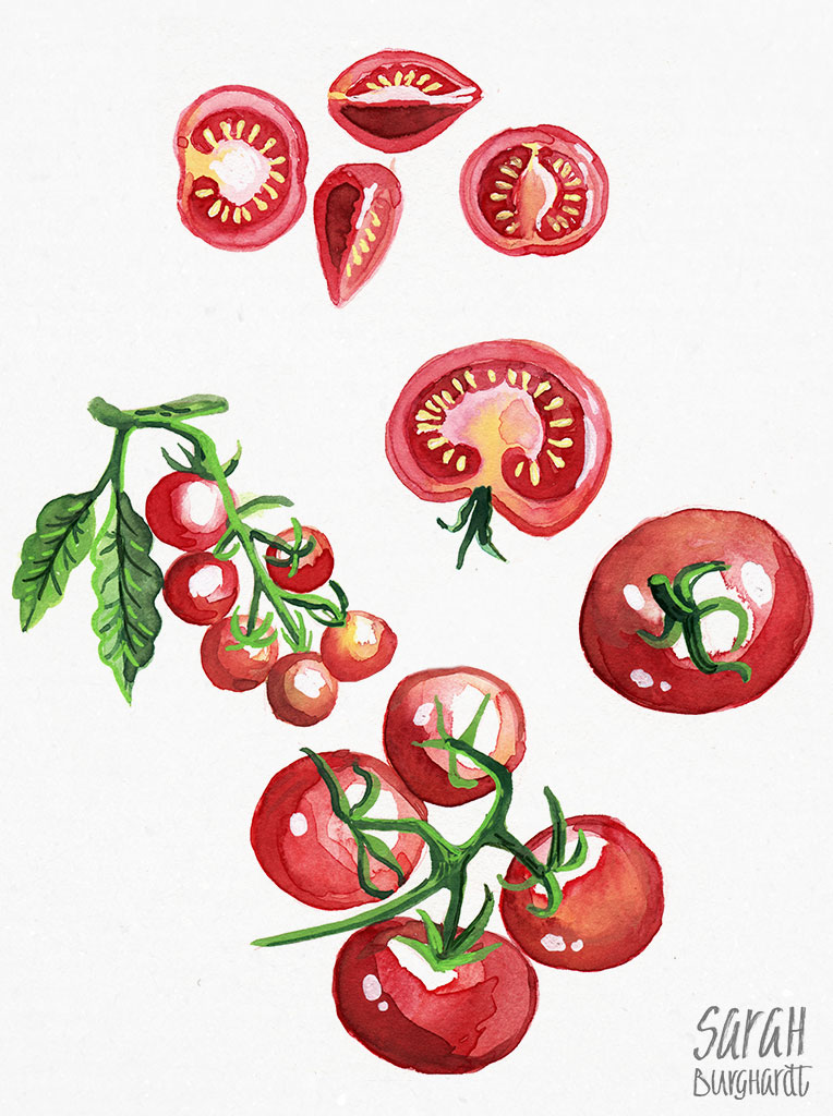 Illustration Tomaten Watercolor