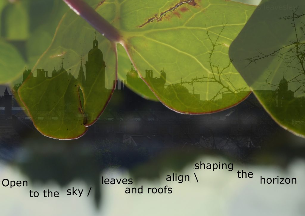 Essential symbiosis: photo shot in Edinburgh