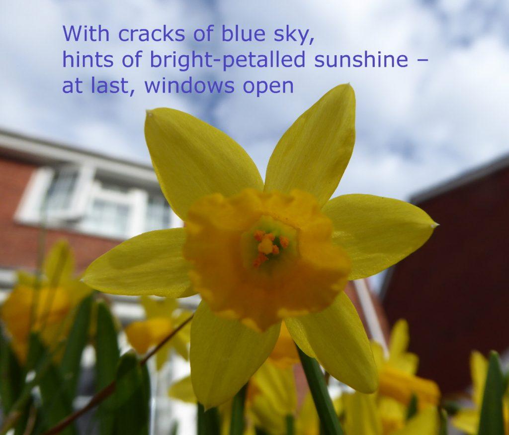 spring haiku for Nine Arches smaller size