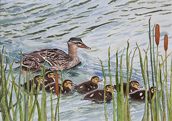 watercolor of ducks
