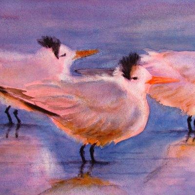 three Royal Terns with bad hair are at the beach