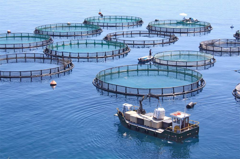 Aquaculture - Communications consultancy