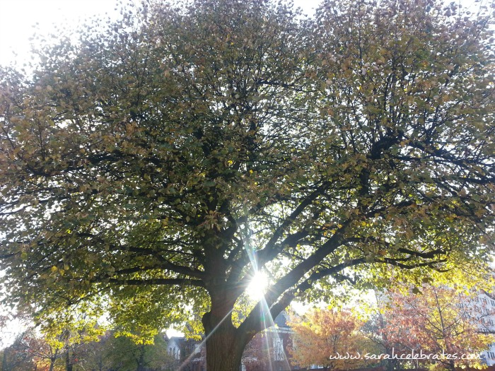 Wordless Wednesday - Sunlit Tree