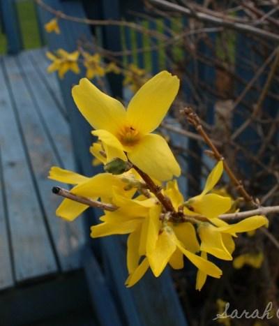 Spring Has Sprung (Finally…)