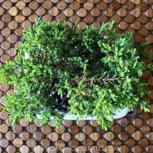 Keep calm and grow on - juniper bonsai #BringOnZen #BringOnZen #ad