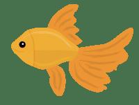 Sarah Celebrates Goldfish