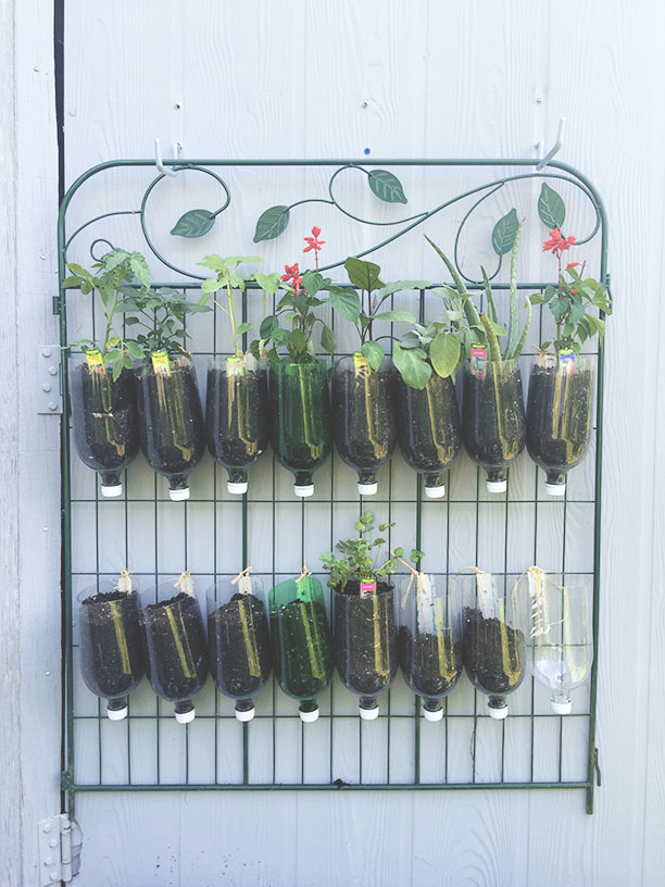 How to build a diy vertical garden for cheap