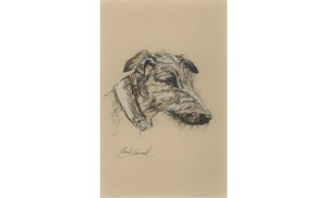 Lurcher - sketch of the head