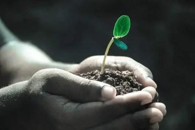 Hands holding a seedling in dirt. Angel Number 12: Planting seeds