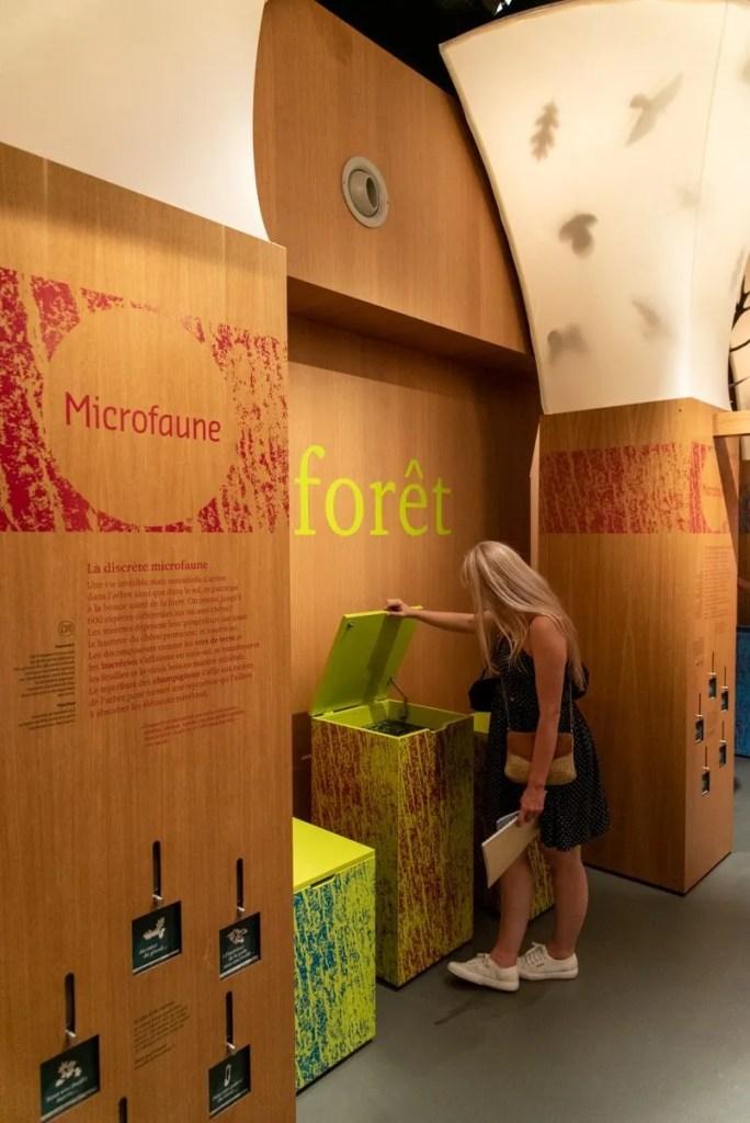 Carnuta forest museum, Vallée du Loir