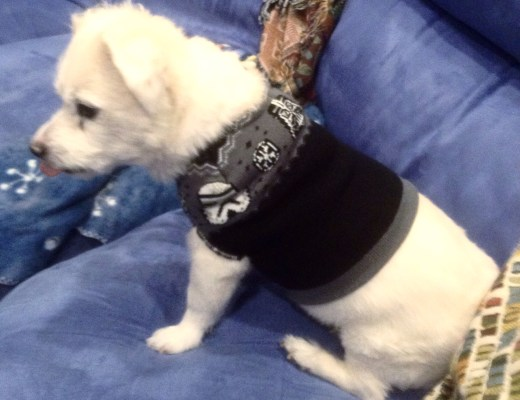 Star Wars Beanie Transformed into Dog Sweater