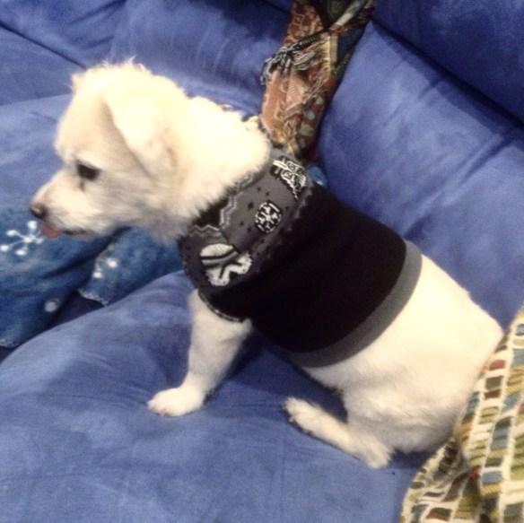 Star Wars Dog Sweater