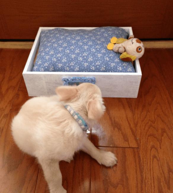 Mr. Darcy Pet Bed DIY Tutorial