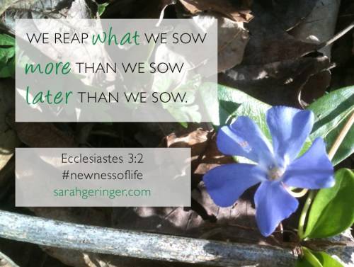 We reap what we sow, more than we sow, later than we sow. Eccl. 3:2 #newnessoflife #bible