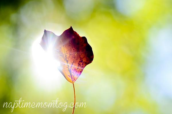 13-Autumn_2011
