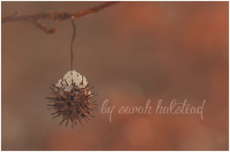 Memories, Dreams and Reflections | Macro