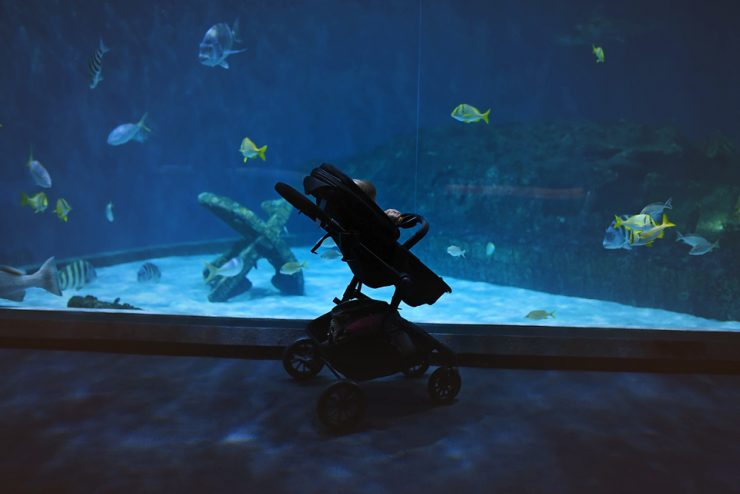 Tips For Visiting The Aquarium
