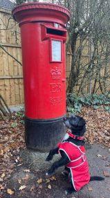 Christmas Post Dog