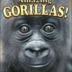 Amazing Gorillas