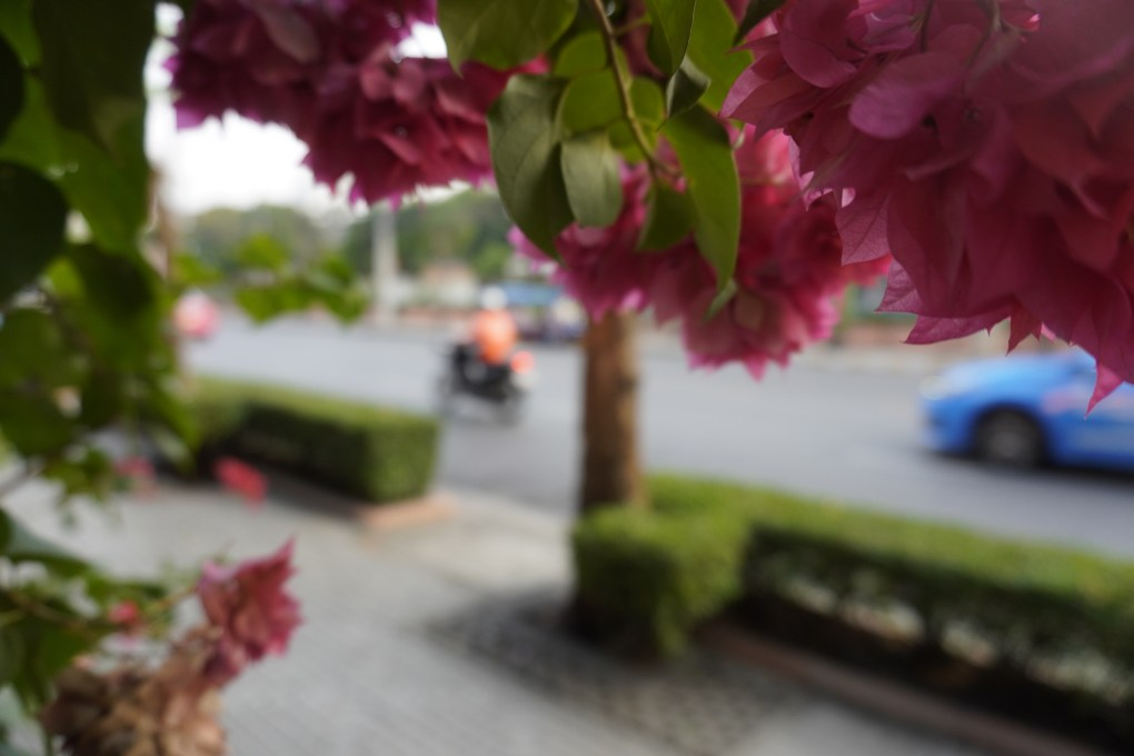Flowers on the street with bustling Bangkok traffic in the background