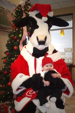 Colt and Santa Cow