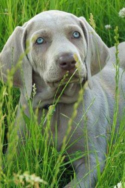 Doggie2