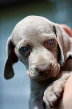 Doggie4