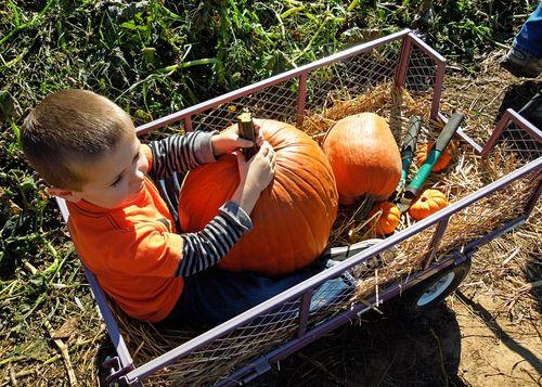 Pumpkinpatch 125_edit