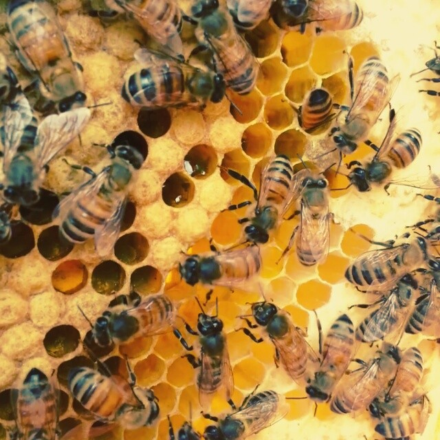 Ask a beekeeper - 5 questions people ask, and answers that might surprise you