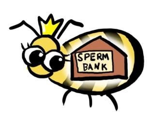 queen bee sperm bank