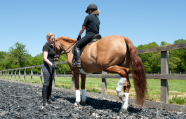 Sarah Sjoholm-Patience Horse and Rider Coaching