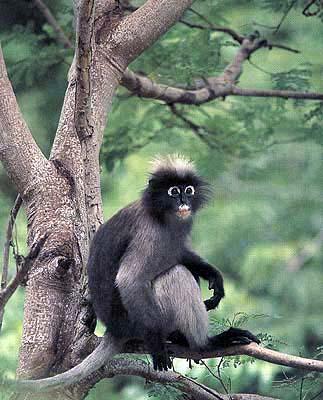 รู้หรือ (ไม่) รู้ -  ลิงก็คือลิง ค่างก็คือค่าง