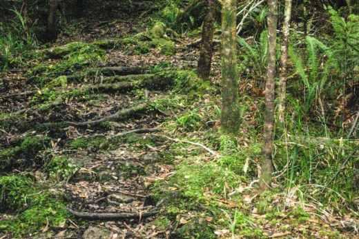 true crime trail runner