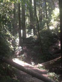 Santa Cruz 30k Trail Race