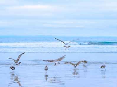 birds on a shore