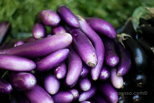 Eggplant, San Francisco Ferry Building Marketplace Farmer's Market