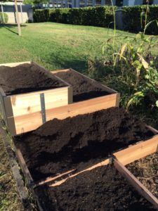 Soil-filled raised beds made of cedar.