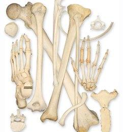 bone health [ 900 x 1079 Pixel ]