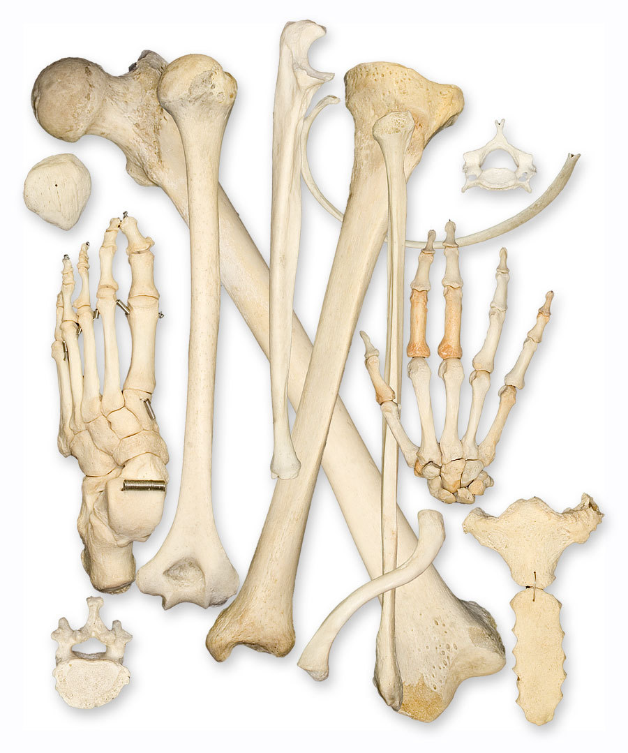 hight resolution of bone health