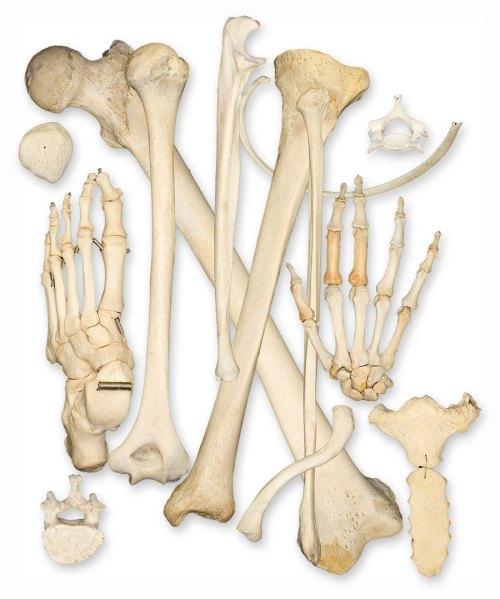 small resolution of bone health