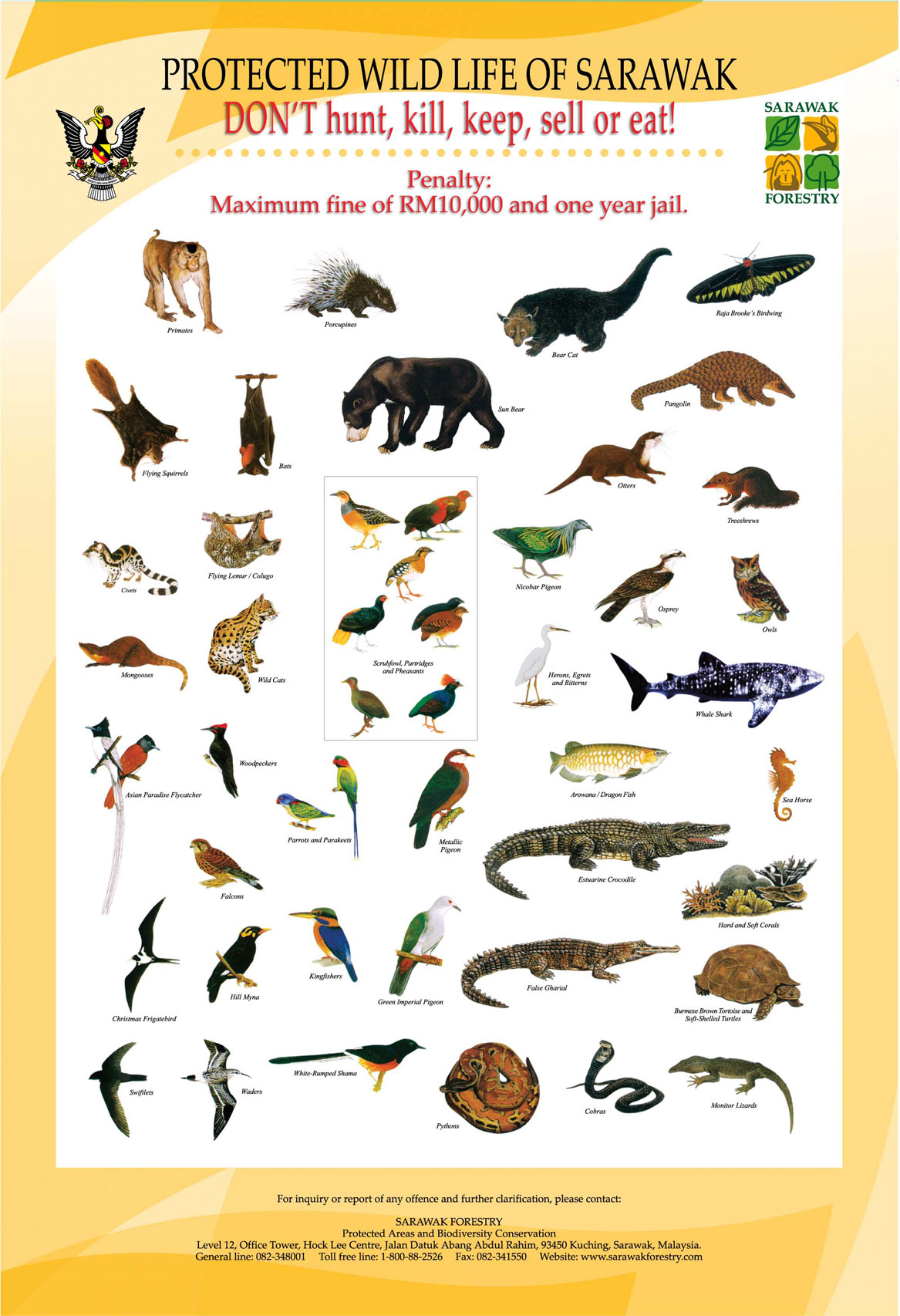 Rainforest Animals List With Names