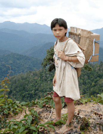 Indigenous communities in have long fought illegal logging in Malaysia.