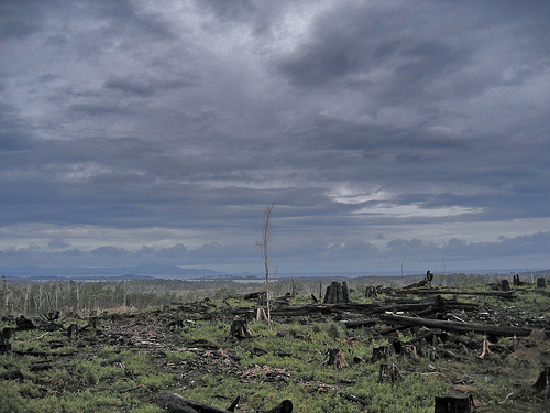 Tasmania forest destruction